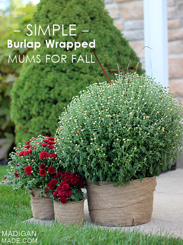 simple-burlap-wrapped-mums-for-fall-0_zpseca4e715