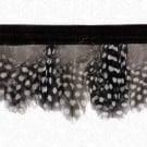 "2.5"" GUINEA HEN FEATHER FRINGE - BLACK/WHITE"