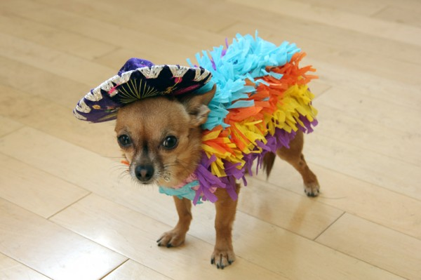 DIY-Dog-Pinata-Costume-600x399