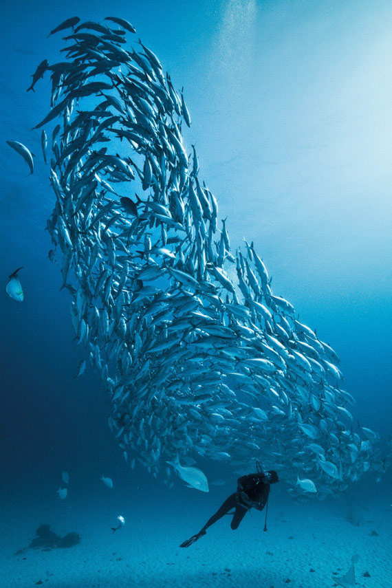 diving-lady-elliot-island
